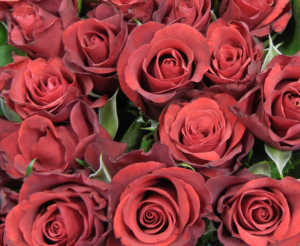 red-roses2