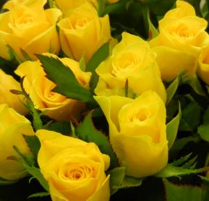 roses-100
