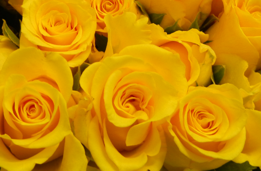 yellow-roses-home