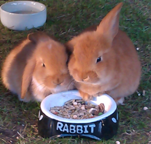 my-rabbits